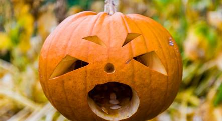 Half-term Halloween Hoot returns to Chatsworth