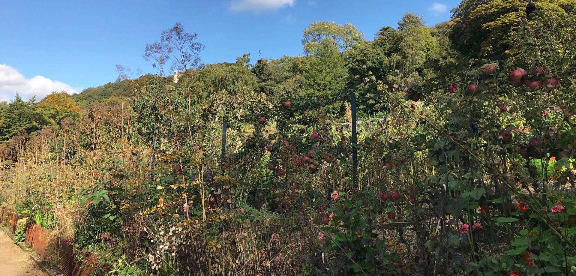 The Kitchen Garden Blog: October