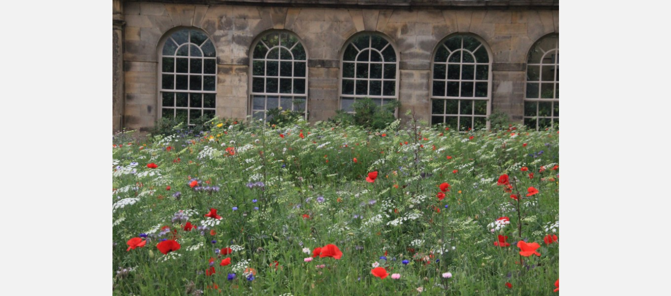 The annual meadow by the First Duke's Greenhouse
